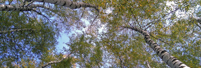 Breze jeseni