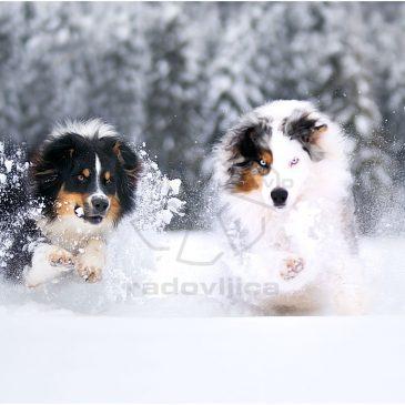 """Fotografska razstava """"Canis Lupus"""""""