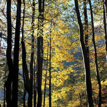 """Fotografska razstava Vide Markovc – """"Drevo, drevesi, drevesa"""""""