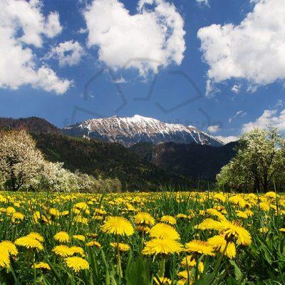 Pomlad pod Begunjščico